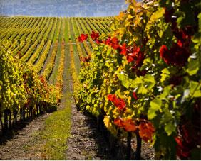 Jackson Triggs Winery 1 171 Niagara Winery Reviews